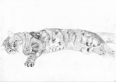 Moggy Drawing - Tabby Cat Relaxing by David Smith