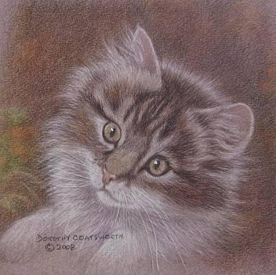Tabby Kitten Print by Dorothy Coatsworth