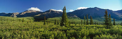 Taiga Forest, Denali National Park Print by Panoramic Images