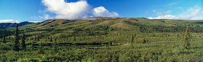 Taiga Forest In Denali National Park Print by Panoramic Images