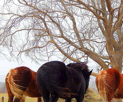 Belgian Draft Horse Photograph - Tail Wind by Karen Cook