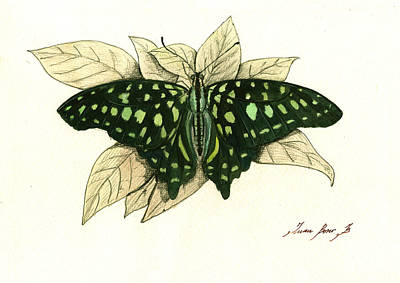 Insect Painting - Tailed Jay Butterfly by Juan Bosco