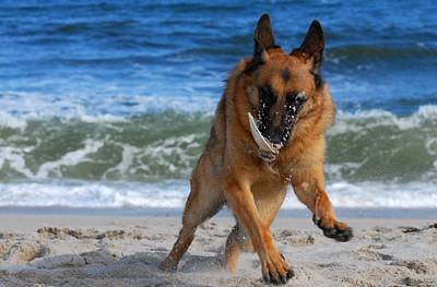 Take Off With A Clam Shell - German Shepherd Dog Print by Angie Tirado