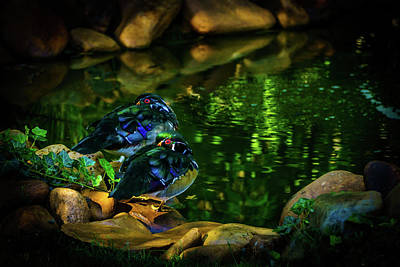With Red. Photograph - Taking A Break - Wood Ducks by TL Mair