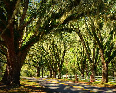 Tourist Attraction Digital Art - Tallahassee Canopy Road by Carla Parris