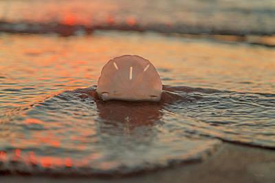 Tangerines Photograph - Tangerine  by Betsy Knapp