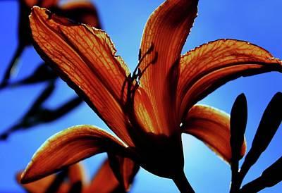 Tangerine Sky Print by Toni Jackson