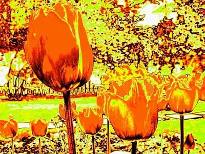 Tangerine Tulips Print by Will Borden