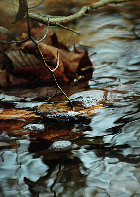 Intuition Photograph - Tapping Into The Stream by Rebecca Sherman