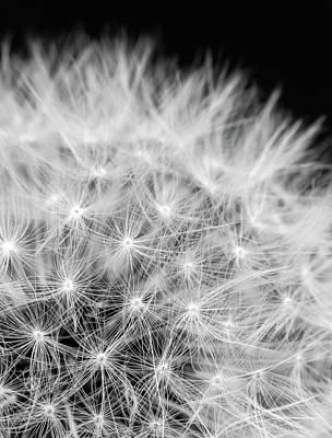 Florets Photograph - Taraxacum by Wim Lanclus
