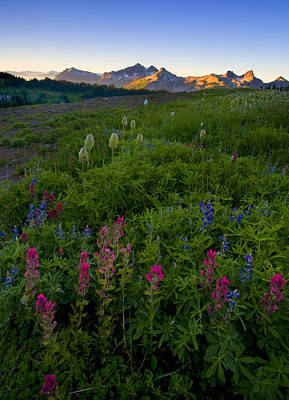Lupine Photograph - Tatoosh Dawn by Mike  Dawson