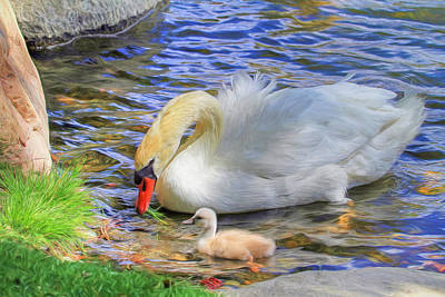 Swan Photograph - Teachings by Donna Kennedy