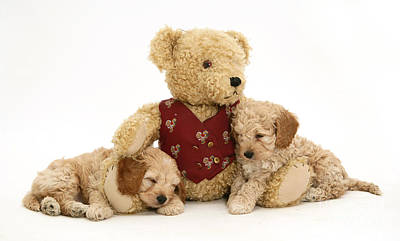 Teddy Bear With Puppies Print by Jane Burton