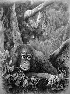 Orangutan Drawing - Teenager by Miro Gradinscak