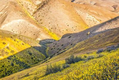 Temblor Range Wildflowers Print by Marc Crumpler