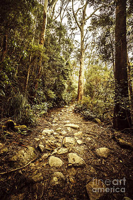 Temperate Mountain Trail Print by Jorgo Photography - Wall Art Gallery