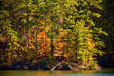 Tennessee Fall Trees Original by Paul Bartoszek