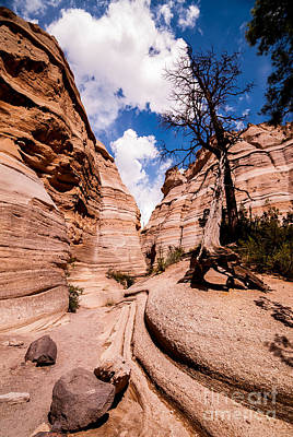 Tent Rocks Canyon Trail Print by Bob and Nancy Kendrick