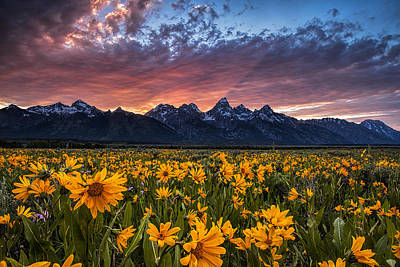 Tetons And Wildflowers At Sunset Print by Andrew Soundarajan