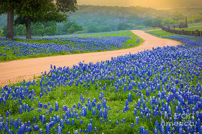 Lupine Photograph - Texas Country Road by Inge Johnsson