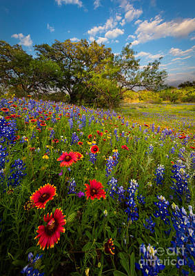 Texas Paradise Print by Inge Johnsson