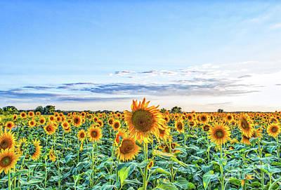 Texas Sunflowers Farm Print by Tod and Cynthia Grubbs