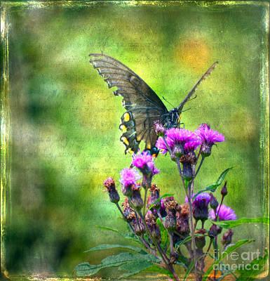 Textured Art Photograph - Textured Art - Black Butterfly by Kerri Farley