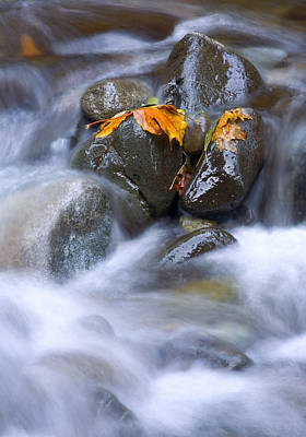 Waterfall Photograph - Textures Of Autumn by Mike  Dawson
