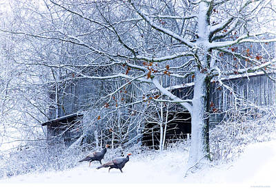 Wild Turkey Photograph - Thanksgiving Guests by Ron Jones