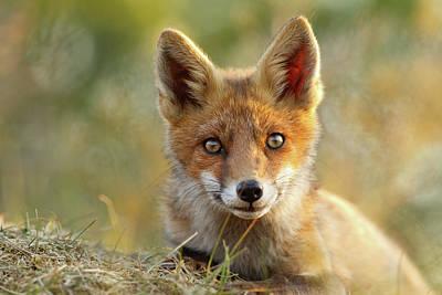 That Face - Cute Fox Kit Print by Roeselien Raimond
