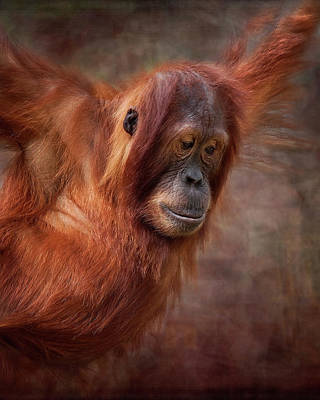 Orangutan Digital Art - That Look by Heather Thorning