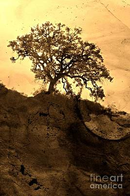 The Hills Mixed Media - That Old Tree by Clare Bevan