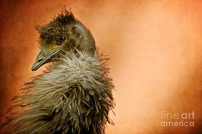 Emu Photograph - That Shy Come-hither Stare by Lois Bryan