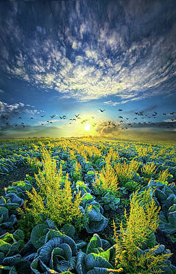 Cabbage Photograph - That Voices Never Shared by Phil Koch