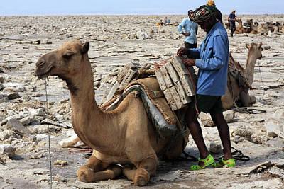 Camel Photograph - The Afar People  by Aidan Moran