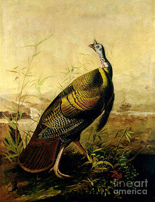 Cocks Painting - The American Wild Turkey Cock by John James Audubon