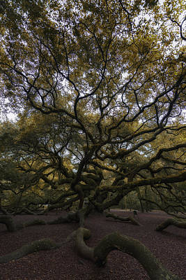 Angel Oak Photograph - The Angel Oak Tree by Rick Berk