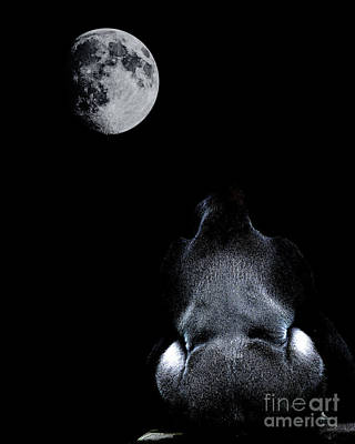 Ape Digital Art - The Ape And The Moon . Photoart . R7917 by Wingsdomain Art and Photography
