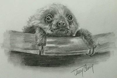 Sloth Drawing - The Baby Sloth by Terry Ganey