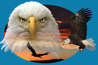 The Bald Eagle 2 Print by Shane Bechler