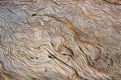 The Bark Of A Pine Is Sandblasted Print by Taylor S. Kennedy