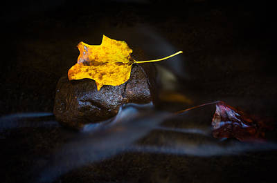 The Beauty Of Autumn Print by Parker Cunningham