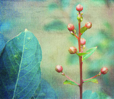 The Beauty Of Nature Print by Kathy Bucari
