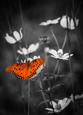 Butterfly In Flight Photograph - The Beauty Of The Monarch by Parker Cunningham
