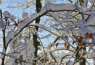 Framed Winter Snow Photograph - The Beauty Of Winter by Gerlinde Keating - Keating Associates Inc