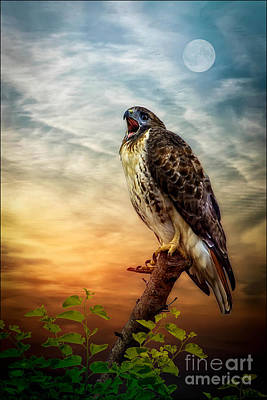Red Tail Hawk Photograph - The Big Scream by Tom York Images