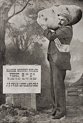 Potato Drawing - The Biggest Potato On Record In 1879 by Vintage Design Pics