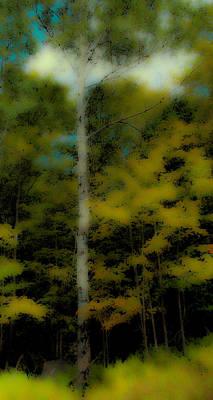 Birch Photograph - The Birch On Maple Ridge by David Patterson