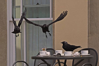 Crows Photograph - The Birds by Rona Black