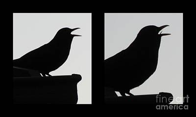 Photograph - The Black Birds  Songs by Joyce Woodhouse
